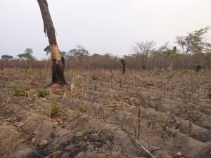 Ba Allan's field after the fire.