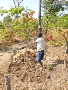 Bwalya covering the maize cobs with soil.