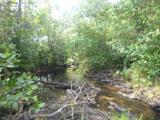 A creek along the Mfuba-Luena road.