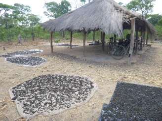"Caterpillars drying in the sun at ""caterpillar camp,"" aka the Mfuba community nsaka."