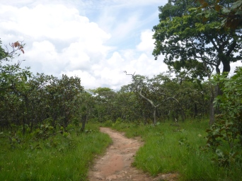 Path down to Mfuba's dambo.