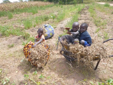 Allan Jr., Katongo, and Agri after bringing dried bean vines to my field.