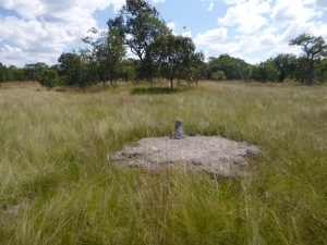 Termite mounds are common around Zambia's wetlands and miombo woodlands.