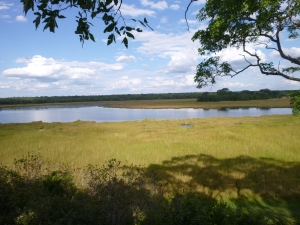 View across one of the many wetland-fringed lakes in Kasanka NP.