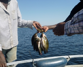 Haggling completed, a local fisherman hands over his catch of bream to the speedboat passengers who've bought them.