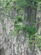 Tree roots cling to the cliffs around Kalambo Falls