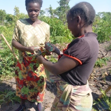 Ba Mary and Ba Agatha, doling out fertilizer.