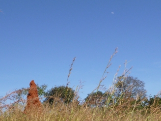 One of the many impressive termite mounds of Northwestern Province.