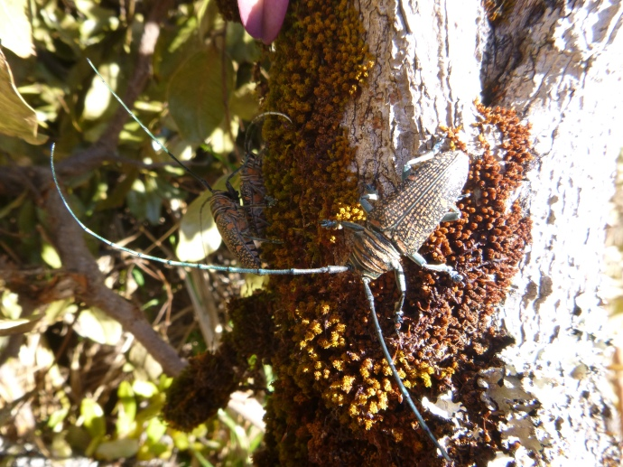 Beautiful beetles we found along the banks of the Lunga River.