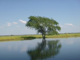 Tree reflection in the Zambezi floodplain.