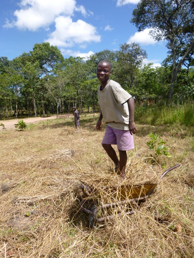 Bwalya packing down dried grasses for my compost pile.