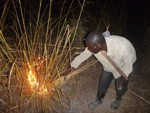 Ba Allan starting a fire around the Mfuba Co-op's field - to protect it from bigger, uncontrolled burning later in the dry season.