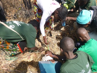 The Green Pride taking measurements of ground litter depth for a simple habitat diversity observation.