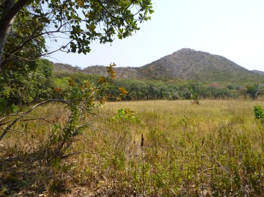 Palm-fringed wetland at the base of the mountains.