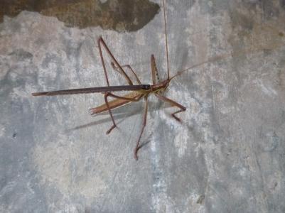 Very cool locust.