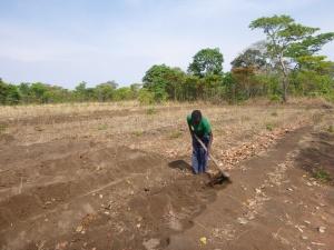 Stephen tilling my field.