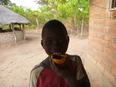 Allan Jr. eating icisongole, a delicious wild fruit that looks like brains inside.