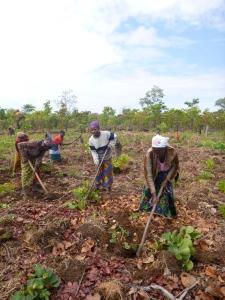 Ba Juliet, Ba Miriam, and Banakulu Mishek, prepping the community demonstration plot.