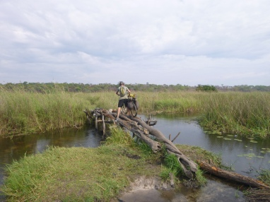 Adam negotiating the first of six janky log bridges over a braided wetland stream, on the way to Taylor's village in Chungu.