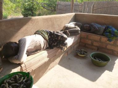 Norida, Lavenda, and Annette taking a nap after collecting caterpillars all morning.