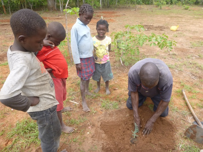 Ba Allan Mwango planting a juniper seedling with his son, Timo, left, and some neighbor kids.