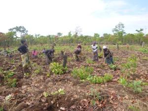 Mfuba Co-op members preparing their conservation farming demonstration field.
