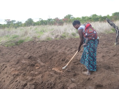 Bana Ino farming with baby Knowledge on her back.