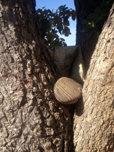 A rubber boot left in the crook of a tree.