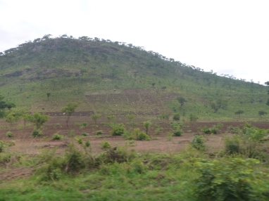 Farming on a steep, unterraced hillside. They've gotta be losing soil like crazy ... but this part of Malawi is so crowded - and so much land taken up by commercial farmers - that small-scale farmers have been pushed into the hills.
