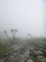 Mountain mists and crazy trees.