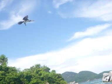Cool bird in flight.