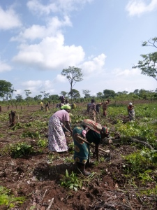 Members of the Kutemwa Youth Club and the Kashalyashi Women's Co-Op tilling the new field.