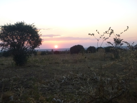 Sunset behind Scott's heavily deforested site.