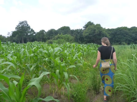 Kathryn walking past a field of maize. (This is a common site in everyone's village!)