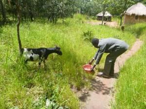 Ba Bernardi giving one of the goats water.